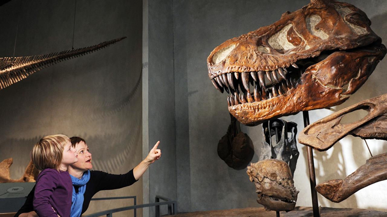Bảo tàng Khoa học Tự nhiên Denver